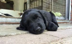 pup moe02