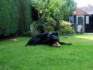knauw hond02