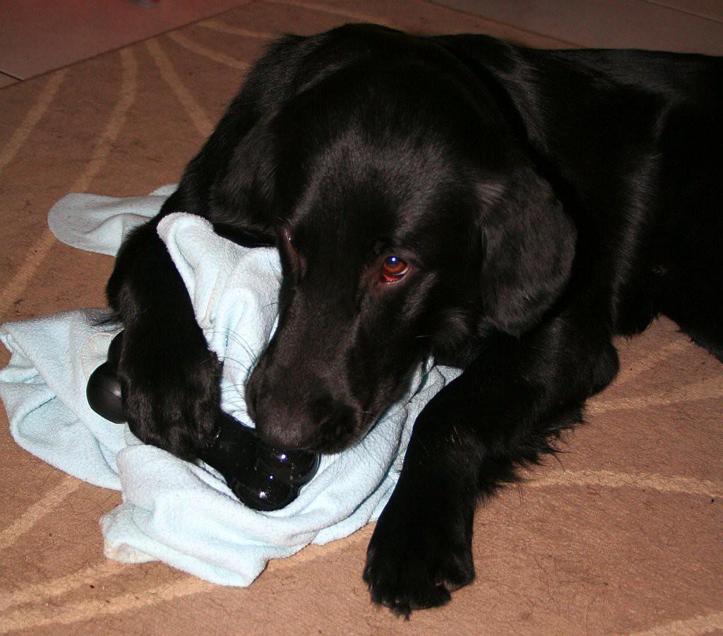 spelen met bot en deken01