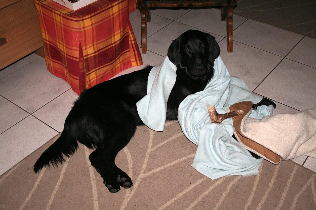 spelen met bot en deken02