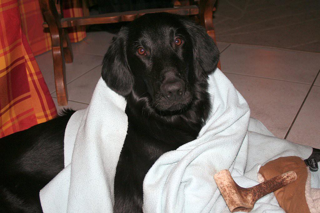 spelen met bot en deken03