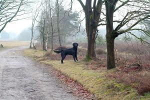 P&B-Strabrechtse Heide-150221-03