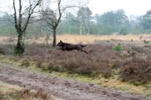 P&B-Strabrechtse Heide-150221-05