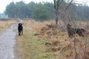 P&B-Strabrechtse Heide-150221-07