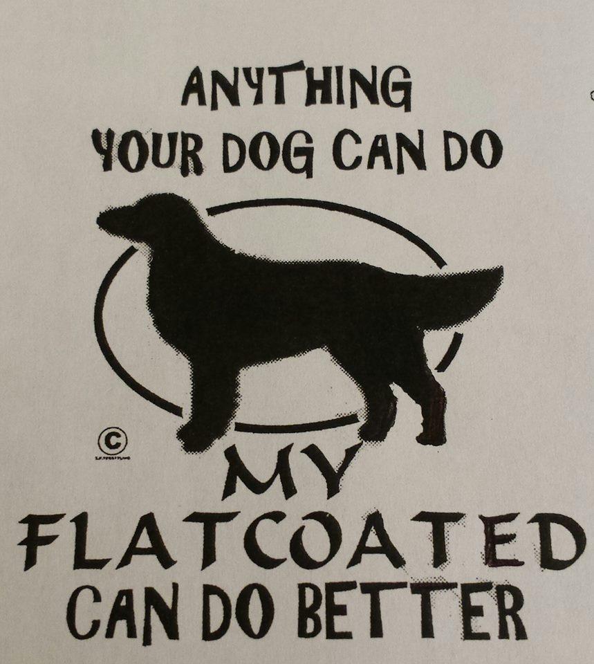 flatcoat better