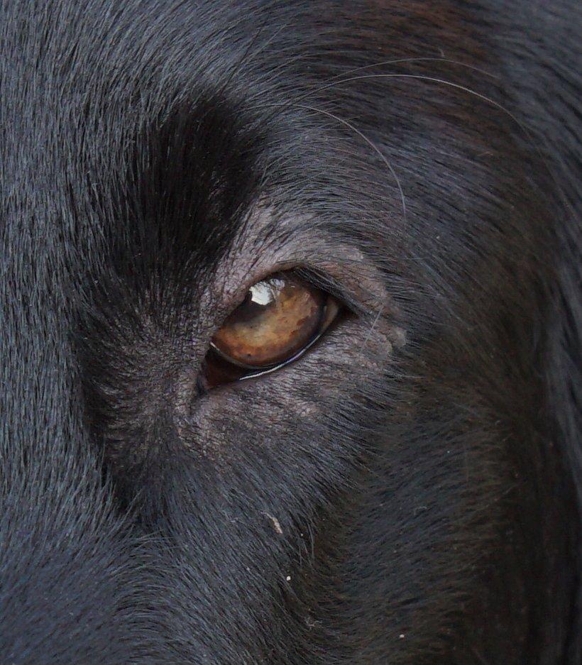 02 closeup oog paddy 2