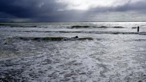 paddy-aan-zee05