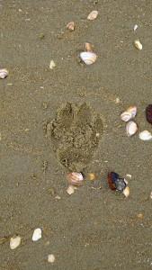 paddy-aan-zee12