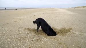 paddy-aan-zee15