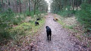 151227 Doggy Date-Stiphoutse-bossen001