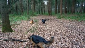 151227 Doggy Date-Stiphoutse-bossen002