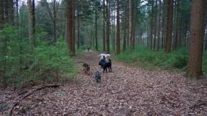 151227 Doggy Date-Stiphoutse-bossen004