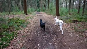 151227 Doggy Date-Stiphoutse-bossen005