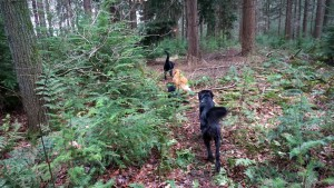 151227 Doggy Date-Stiphoutse-bossen007