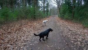 151227 Doggy Date-Stiphoutse-bossen008