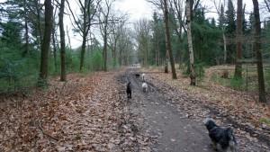151227 Doggy Date-Stiphoutse-bossen009