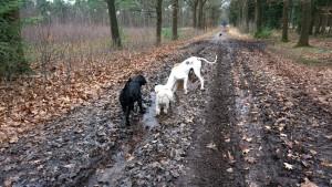 151227 Doggy Date-Stiphoutse-bossen010