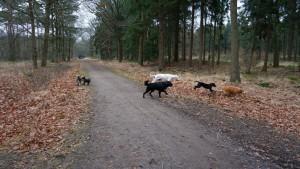 151227 Doggy Date-Stiphoutse-bossen012