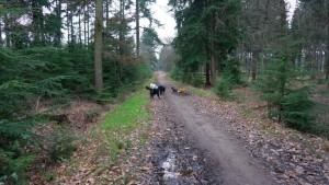 151227 Doggy Date-Stiphoutse-bossen014