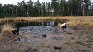151227 Doggy Date-Stiphoutse-bossen016