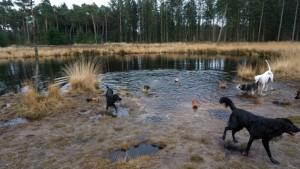 151227 Doggy Date-Stiphoutse-bossen017