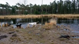 151227 Doggy Date-Stiphoutse-bossen018