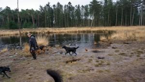 151227 Doggy Date-Stiphoutse-bossen020