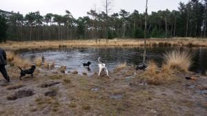 151227 Doggy Date-Stiphoutse-bossen022