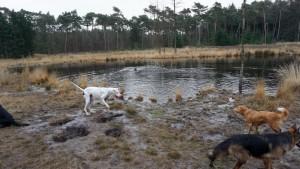 151227 Doggy Date-Stiphoutse-bossen025