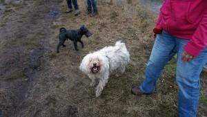 151227 Doggy Date-Stiphoutse-bossen026