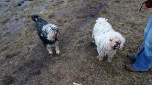151227 Doggy Date-Stiphoutse-bossen028