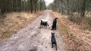 151227 Doggy Date-Stiphoutse-bossen029