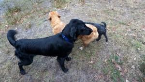 151227 Doggy Date-Stiphoutse-bossen030