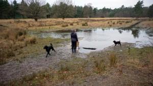 151227 Doggy Date-Stiphoutse-bossen033