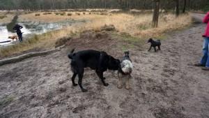151227 Doggy Date-Stiphoutse-bossen034