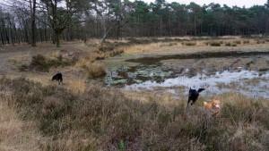 151227 Doggy Date-Stiphoutse-bossen038