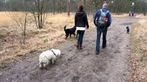 151227 Doggy Date-Stiphoutse-bossen039