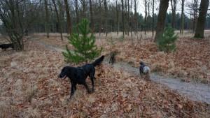 151227 Doggy Date-Stiphoutse-bossen041