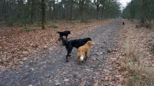 151227 Doggy Date-Stiphoutse-bossen042