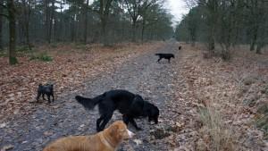 151227 Doggy Date-Stiphoutse-bossen043