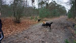151227 Doggy Date-Stiphoutse-bossen044