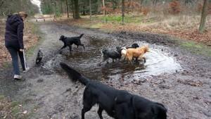 151227 Doggy Date-Stiphoutse-bossen045