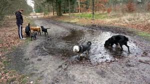 151227 Doggy Date-Stiphoutse-bossen046