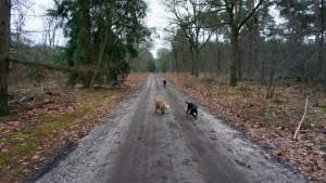 151227 Doggy Date-Stiphoutse-bossen048