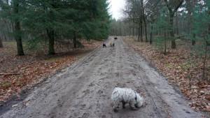 151227 Doggy Date-Stiphoutse-bossen049