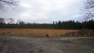 151227 Doggy Date-Stiphoutse-bossen050