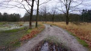 151227 Doggy Date-Stiphoutse-bossen051