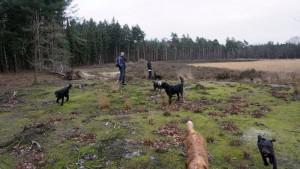 151227 Doggy Date-Stiphoutse-bossen054