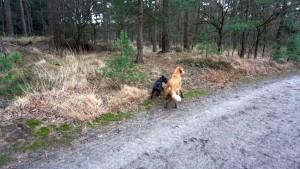 151227 Doggy Date-Stiphoutse-bossen055