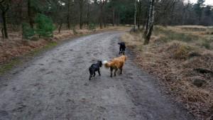 151227 Doggy Date-Stiphoutse-bossen056
